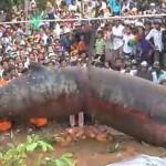 Ismeretlen szörnytetemet ástak ki Kambodzsában [Videó]