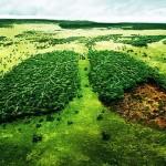 Új térkép a globális erdőirtásról