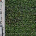 London legnagyobb függőleges kertje