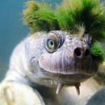 Különös kinézetű és ritka teknősök