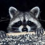 Vicces videók lopáson kapott állatokról