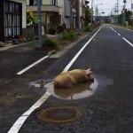 Fukusima napjainkban