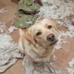Aranyos videó bűnbánó kutyákról