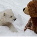 Az árva jegesmedvebocs és legjobb barátja