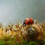 A rétek élővilága – csodálatos miniatűr ökoszisztéma