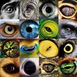 Az állatok különböző látásmódjai az ember látásával összehasonlítva [Videó]