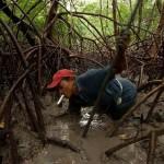 Rákvadászat a Brazil mocsárban