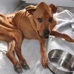 Állatvédők mentették meg a csontsovány, magára hagyott kutyát