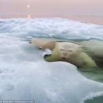 National Geographic Photo Contest 2013 legjobb fotói