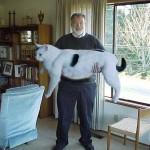 A világ legkövérebb macskái