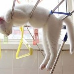 Macskák, akik bárhol elalszanak