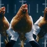 Miért nem mozog a csirkék feje?