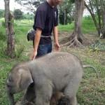Így örül gondozójának a kis elefánt