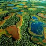 Pantanal – a világ legsűrűbb növényi és állati ökoszisztémája