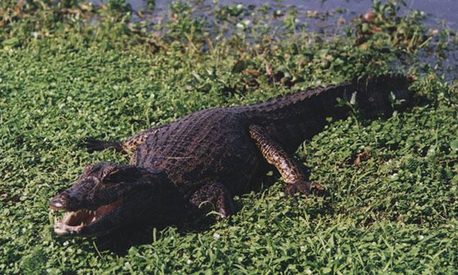 pantanal-2