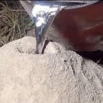 Forró alumíniummal irtják a tűzhangyákat az Egyesült Államokban