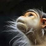 Különleges hangulatú fotósorozat a majmok gesztusairól