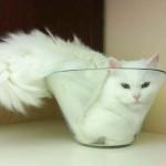 Vicces fotók macskákról, akik a legkisebb helyre is beférnek