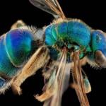 Elképesztő makro fotók méhekről