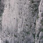 Alex Honnold 500 méteres sziklafalat mászott meg biztosítókötél nélkül