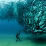 Hal-tornádó a tenger mélyén