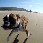 Ilyen boldogan szaladgál a tengerparton a kétlábú kutyus