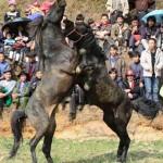A mai napig zajlanak a kegyetlen lóvidalok Ázsiában