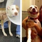 Megmentett kutyák a menhelyen és befogadásuk után