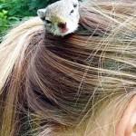 Hajában hordja az árva kismókust egy 16 éves lány