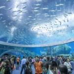 Megnyílt a világ legnagyobb akváriuma