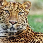 10 állat, ami kihalhat a következő 10 évben