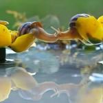 A csigák rejtett világa – Vyacheslav Mishchenko csodálatos fotói