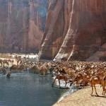 Guelta d`Archei – a Szahara rejtett természeti csodája