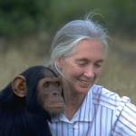 Jane Goodall, a világhírű csimpánzkutató