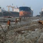 Hajóroncstelep Bangladesben – a világ egyik legveszélyesebb munkája