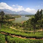 Végeláthatatlan teaültetvények Indiában