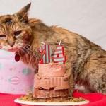 24 éves a világ legöregebb macskája