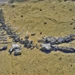 Wadi El-Hitan – ősi bálnák maradványai a sivatagban