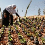 Egy palesztin nő, aki könnygázgránátokat használ vázának