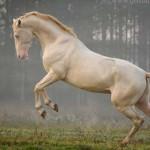 Különleges színű lovak