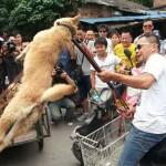 Sokkoló! – A kutyaárusok állatvédők előtt kínozzák az ebeket, hogy megvegyék őket [18+]