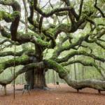 A világ legszebb és legkülönlegesebb fái
