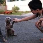 Állatmenhelyet hozott létre egy 9 éves fiú a Fülöp-szigeteken