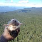 Biddy, az aranyos utazó süni