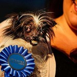 A világ legcsúnyább kutyája 2014-ben