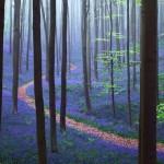 Hallerbos – mesébe illő erdő Belgiumban