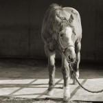 Isa Leshko megható fotói idős állatokról
