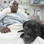 A metrósínek közé zuhant gazdája után ugrott a bátor vakvezető kutya