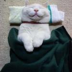 Shironeko, a legvidámabb és leglustább macska