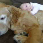 Imádnivaló párosok – kisgyerekek és hatalmas kutyáik